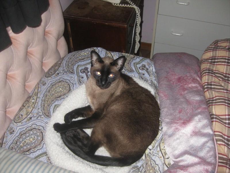 Pat A Cat